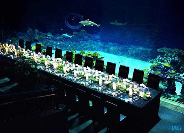 02l13-hamburg-location-dinner-vor-hai-aquarium