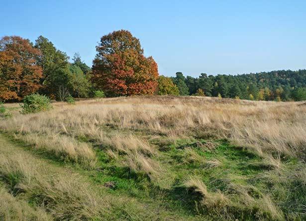 02t11t07hamburg-umland-sightseeing-sehenswertes-lueneburger-heide